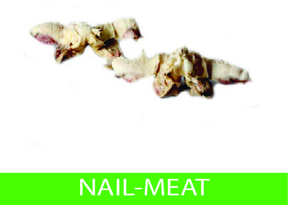 nail-meat
